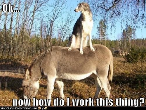 donkey,friends,how,russian wolfhound,what,wolfhound