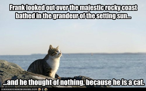 Frank looked out over the majestic rocky coast bathed in the grandeur of the setting sun... ...and he thought of nothing, because he is a cat.