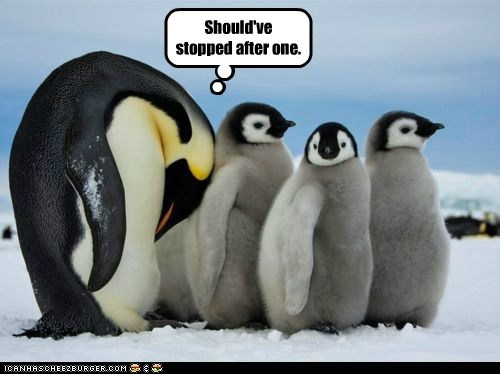 birds children parenting penguin penguins regret - 5869664000