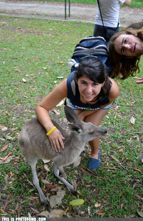 animal Awkward derp kangaroo sideways - 5869712384