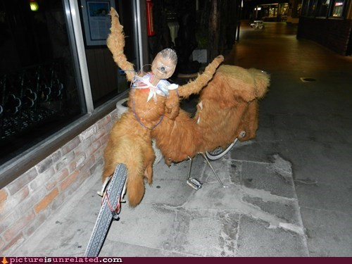 bike,chewbacca,wtf