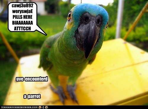 Cheezburger Image 5869933568