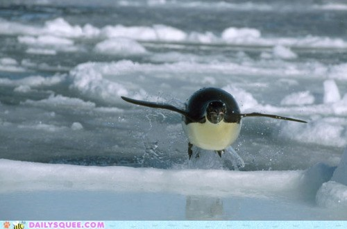 acting like animals falling flying ice jump jumping penguin surface swimming water - 5869947904