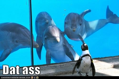 dat ass,dolphin,dolphins,penguins