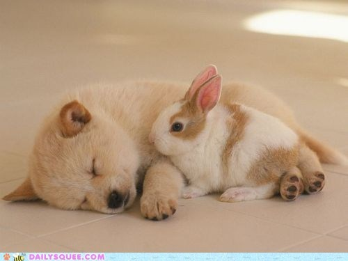 best,blanket,bundle,bunny,cuddling,dogs,friends,friendship,Interspecies Love,puppy,rabbit,sleeping