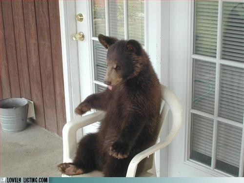 bear,chair,porch patio,seat