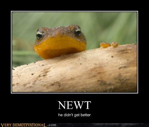animals hilarious newt wtf - 5870819584