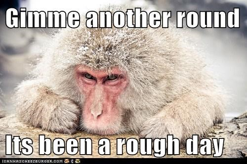 alcohol booze drink japanese macaque monkey rough day - 5870829568