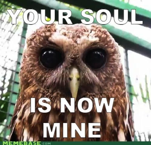 dare Memes owls soul stare - 5871664384