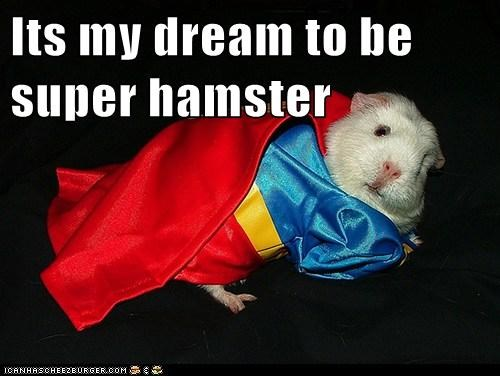Its my dream to be super hamster