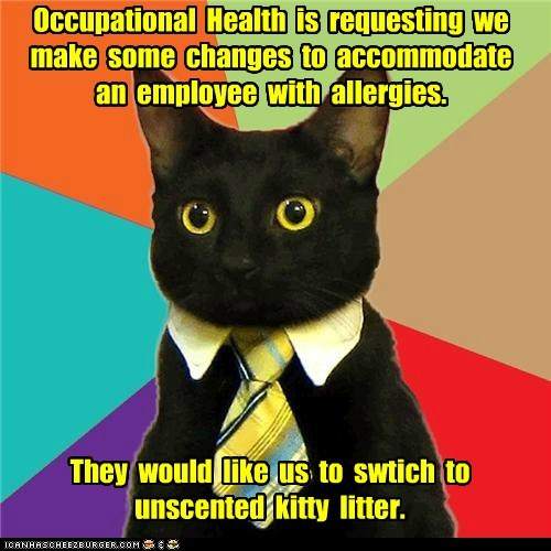 allergies,Business Cat,Cats,kitty litter,litter,Office,scents,smells,unscented,work,workplace