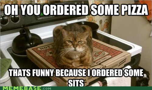 carry out,Cats,Memes,pizza