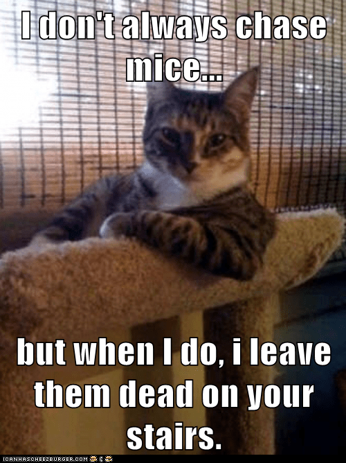 Cats,chase,dead,hunting,i dont always,mice,presents,rodents,stairs,the most interesting man in the world