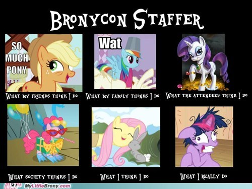 best of week,bronycon,comic,meme,so much pony,staff,what i do