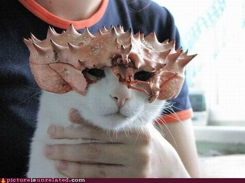 cat crab helmet knight wtf - 5872965120