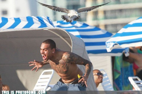 ahhhhh bad example bird Celebrity Edition chris brown rihanna scared word up - 5873146624