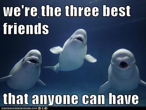 beluga beluga whale best friends friends - 5873538304