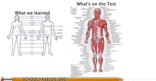 anatomy,good god,what you learned,whats-on-the-test