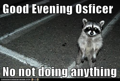 drinking,drunk,innocent,officer,raccoon,what