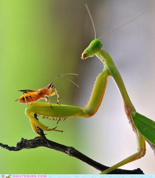 bug conversation cricket deep insect praying mantis talk - 5874673664