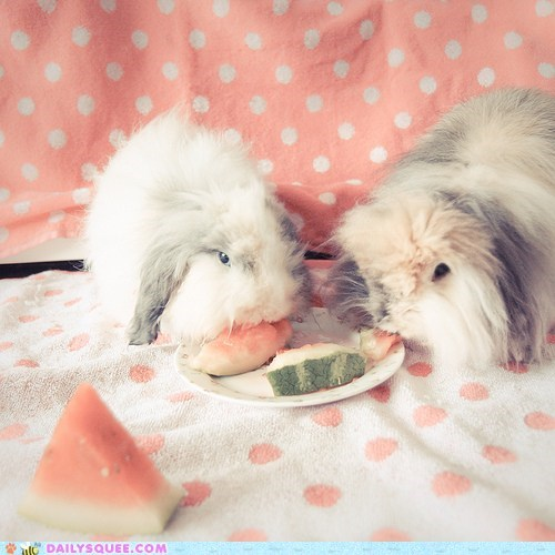 Bunday,bunny,eat,sharing,snack,watermelon