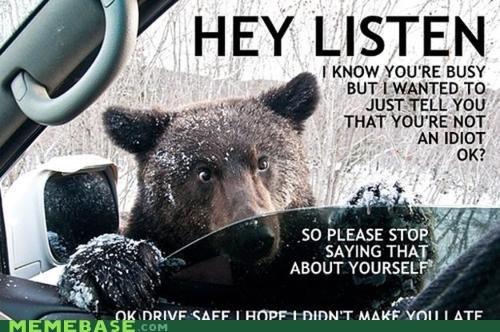 advice,bears,listen,Memes