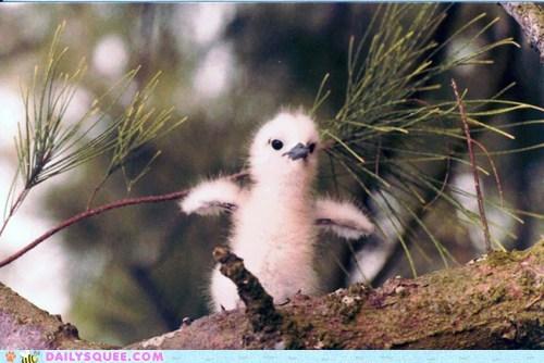 baby bird birds branch chick chicks fuzzy new squee - 5876068096