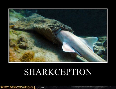 Inception Pure Awesome shark wtf - 5876289536