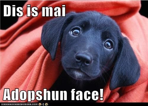 Dis is mai Adopshun face!