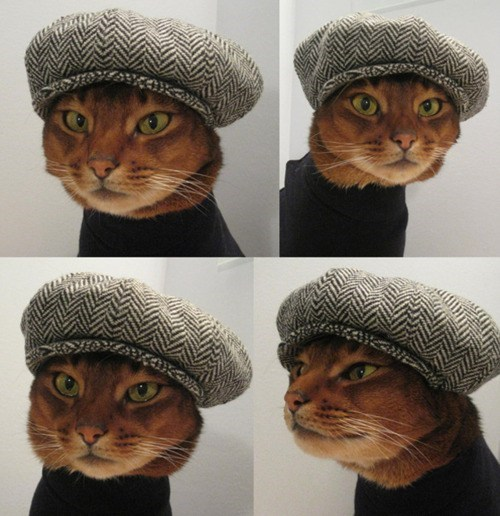 etsy Houte Cature kitteh Newsboy Cap - 5877332224
