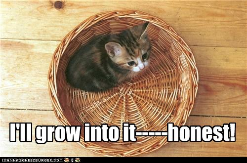 basket caption captioned cat difference grow honest I into kitten size small will - 5877477632