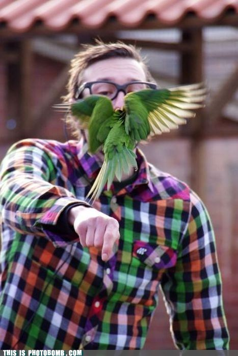 Animal Bomb animals annoying birdbomb hipster hipster glasses - 5877589504
