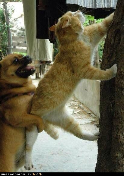 beagle,boost,cat,climb,climbing,friends,friendship,help,helping,kitteh,kitthes r owr friends,mixed breed,pug,whatbreed