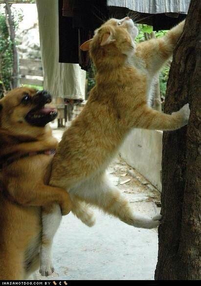 beagle cat climb climbing friends friendship help helping kitteh mixed breed pug whatbreed - 5877625344
