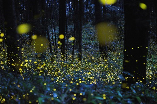 asia,fireflies,Forest,getaways,Japan,night,night photography,trees