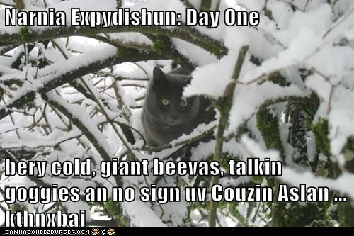 books caption captioned cat Cats cousin day do not want movies narnia one snow winter - 5877862912