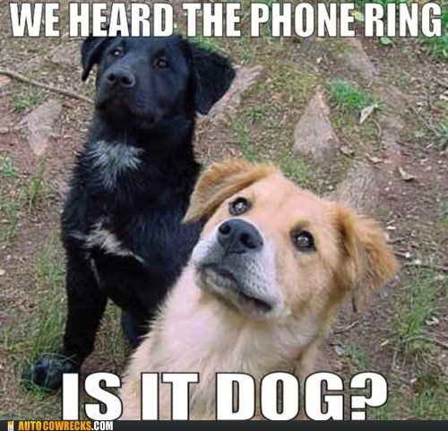 dogs yes this is dog - 5877905408