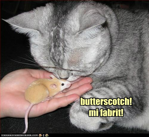 butterscotch caption captioned cat favorite flavor mouse