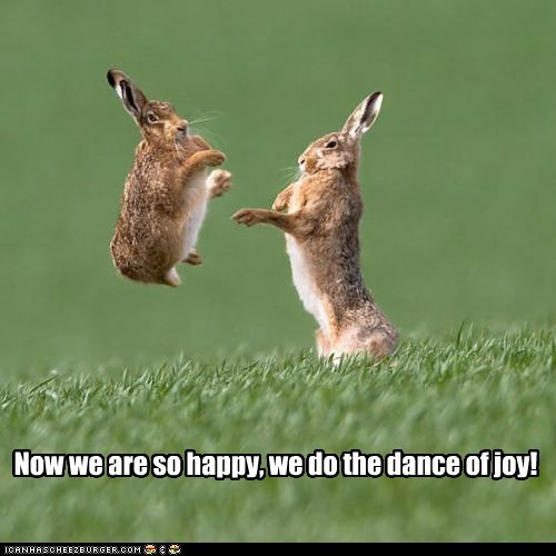 bunnies bunny dance dance of joy dancing happy dance rabbit rabbits - 5878018304