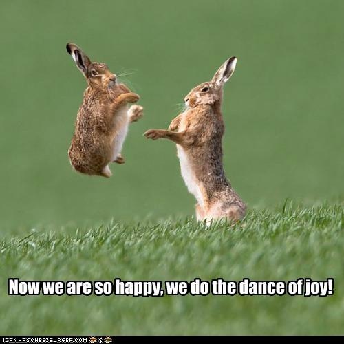 bunnies bunny dance dancing rabbit rabbits - 5878018304