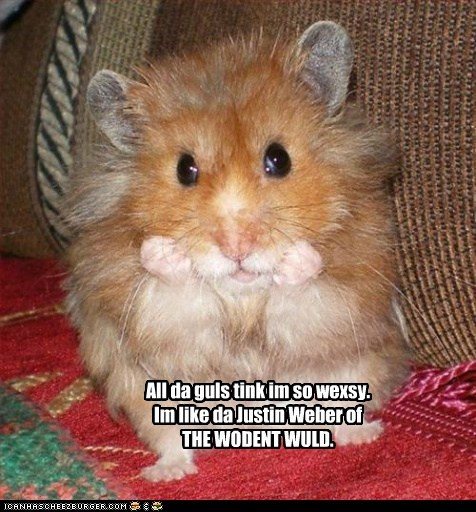 caption cute good looking hamster hamsters handsome justin bieber Music rodents sexy singers - 5878178048