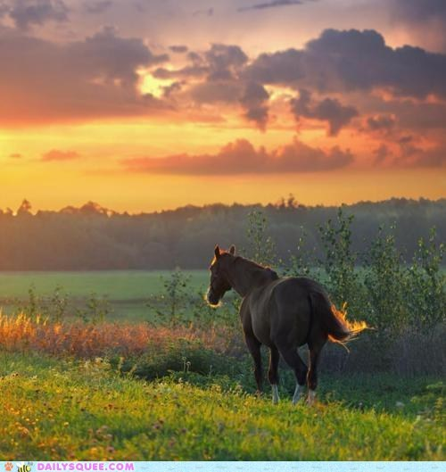 fiield,horse,landscape,pretty,sunset