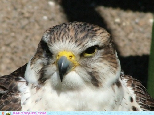 beak bird falcon majestic