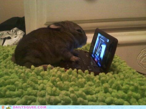 baby,bunny,computer,facebook,Hall of Fame,happy bunday,netbook,rug,tiny