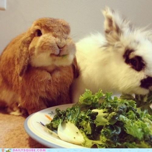 bunnies eating food greens happy bunday lettuce salad - 5878418944