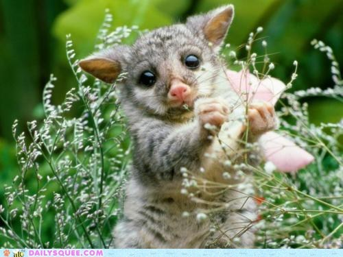 brush tailed possum,marsupial,sflowers,snack,whatsit