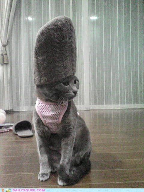 cat harness muffins - 5878429696