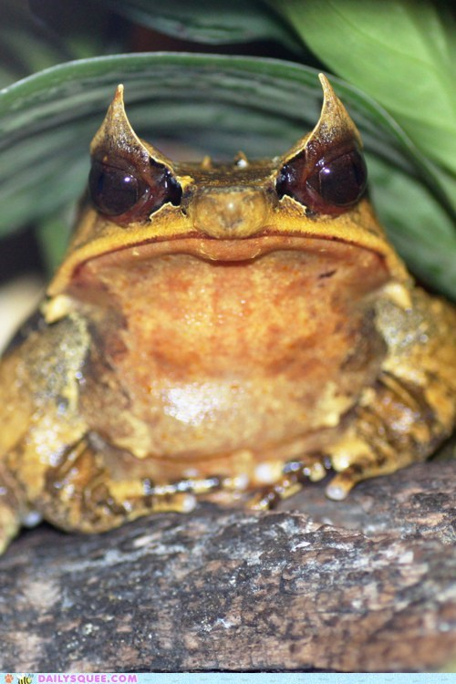 amphibian frog serious stern toad - 5878468608