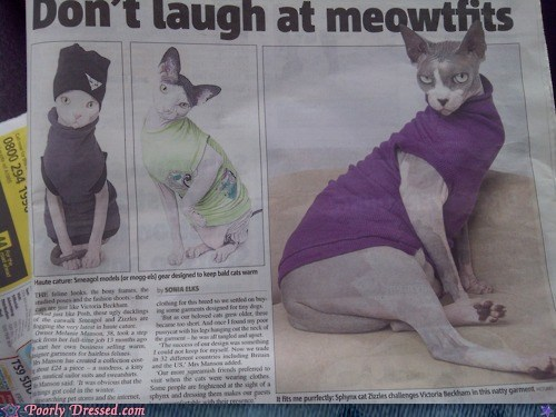 Cats clothing for pets g rated meowtfits newspaper poorly dressed