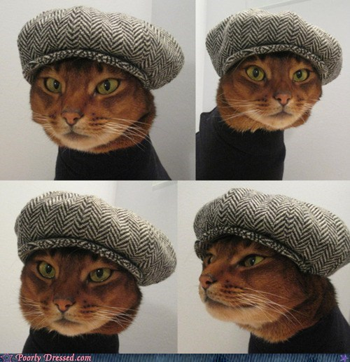 cat,Cats,funny,g rated,hat,poorly dressed